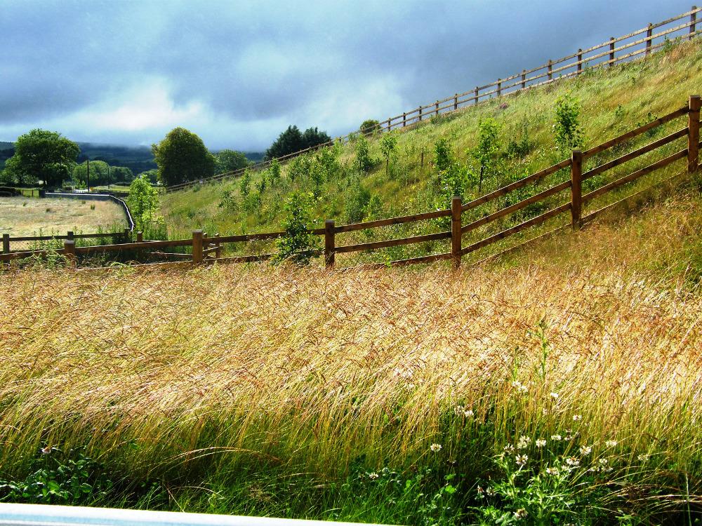 roads planting, infrastructure landscape design, planting design, landscape planning