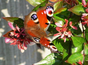 Austen-Associates-BiodiversityinDublinCityGardens-FI